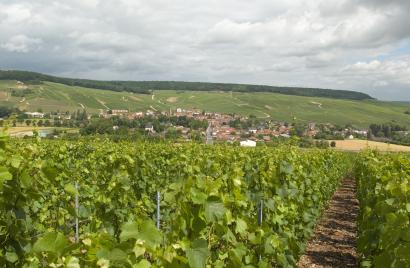 Coteaux sud d'Epernay